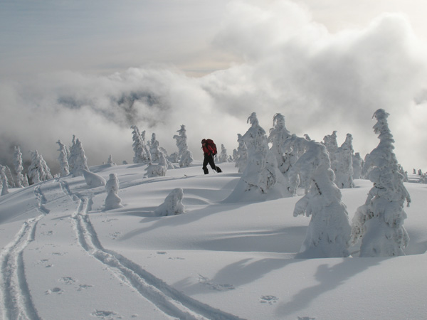 frozen-trees