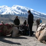 Yaks don't do any porter work at Muztagh Ata, it's all camels and donkeys.