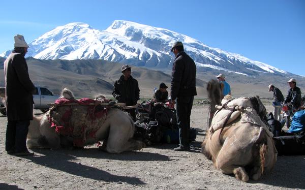camels-subashi